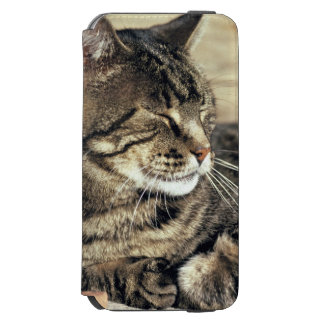 USA, Utah, Capitol Reef NP. Sleeping tabby cat iPhone 6/6s Wallet Case