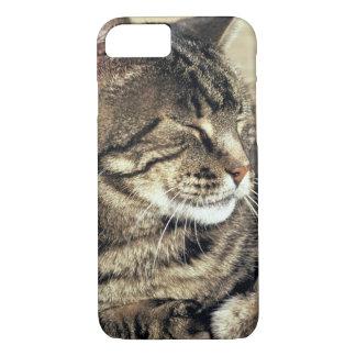 USA, Utah, Capitol Reef NP. Sleeping tabby cat iPhone 8/7 Case