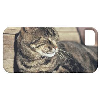USA, Utah, Capitol Reef NP. Sleeping tabby cat iPhone SE/5/5s Case