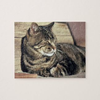 USA, Utah, Capitol Reef NP. Sleeping tabby cat Jigsaw Puzzle
