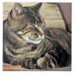 USA, Utah, Capitol Reef NP. Sleeping tabby cat Large Square Tile