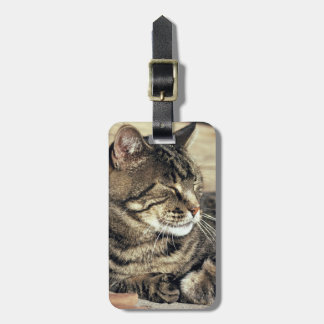 USA, Utah, Capitol Reef NP. Sleeping tabby cat Luggage Tag