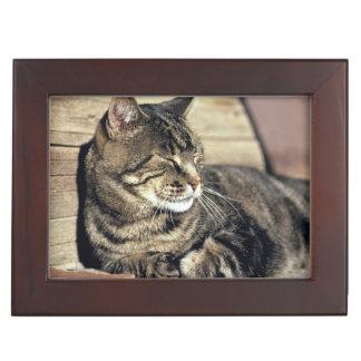 USA, Utah, Capitol Reef NP. Sleeping tabby cat Memory Box