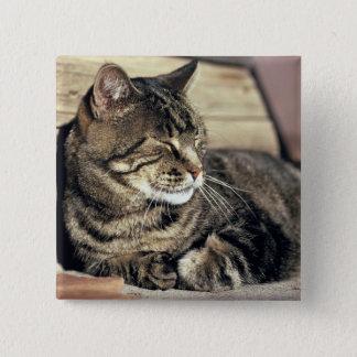 USA, Utah, Capitol Reef NP. Sleeping tabby cat Pinback Button