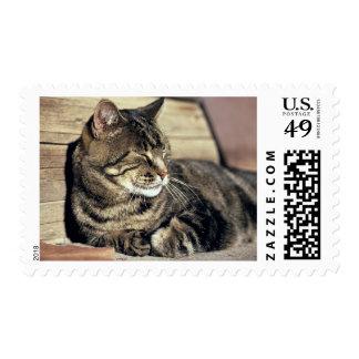 USA, Utah, Capitol Reef NP. Sleeping tabby cat Postage Stamp
