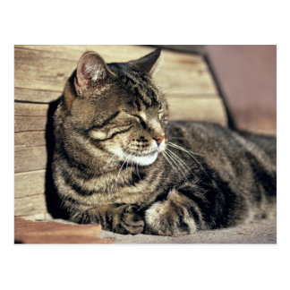 USA, Utah, Capitol Reef NP. Sleeping tabby cat Postcard
