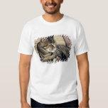 USA, Utah, Capitol Reef NP. Sleeping tabby cat Shirts