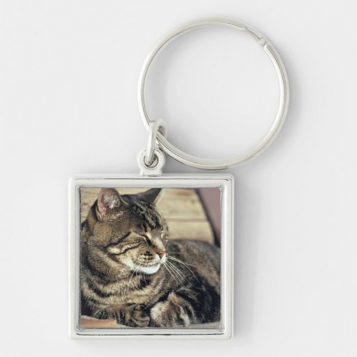 USA, Utah, Capitol Reef NP. Sleeping tabby cat Silver-Colored Square Keychain