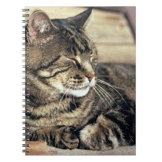 USA, Utah, Capitol Reef NP. Sleeping tabby cat Spiral Notebook