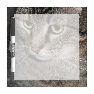 USA, Utah, Close-up of domestic cat Dry-Erase Board