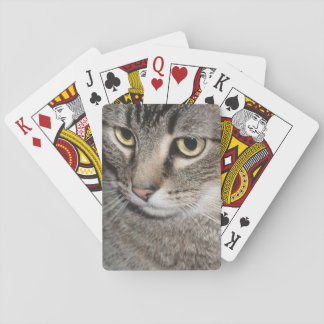 USA, Utah, Close-up of domestic cat Playing Cards