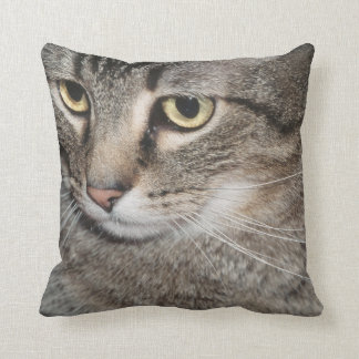 USA, Utah, Close-up of domestic cat Throw Pillow