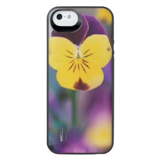 USA, Utah, Close-Up of Viola tricolor in garden iPhone SE/5/5s Battery Case