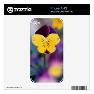 USA, Utah, Close-Up of Viola tricolor in garden Skin For The iPhone 4S