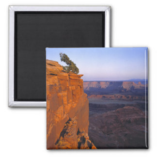 USA, Utah, Dead Horse Point SP. Late light turns 2 Inch Square Magnet