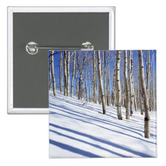USA, Utah, Dixie National Forest, Aspen Grove Button