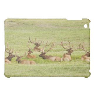 USA, Utah, Group of bull Elk (Cervus canadensis) iPad Mini Cover