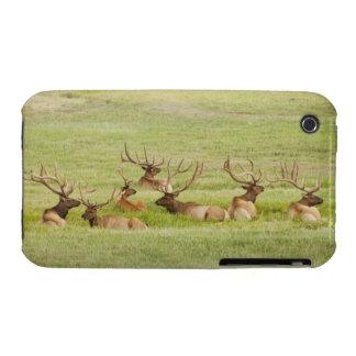 USA, Utah, Group of bull Elk (Cervus canadensis) iPhone 3 Case-Mate Case