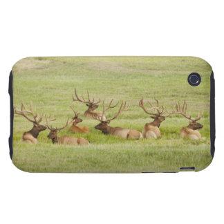 USA, Utah, Group of bull Elk (Cervus canadensis) Tough iPhone 3 Covers