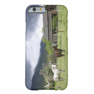 USA, Utah, Horses on ranch Barely There iPhone 6 Case