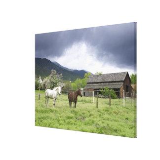 USA, Utah, Horses on ranch Canvas Prints