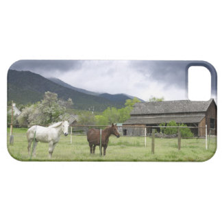 USA, Utah, Horses on ranch iPhone SE/5/5s Case