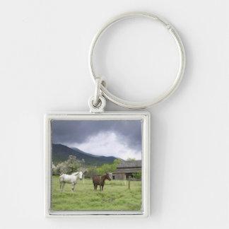 USA, Utah, Horses on ranch Keychain
