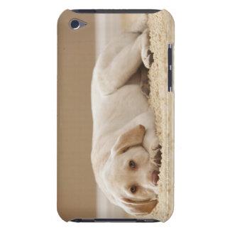 USA, Utah, Lehi, Portrait of Yellow Labrador iPod Case-Mate Case