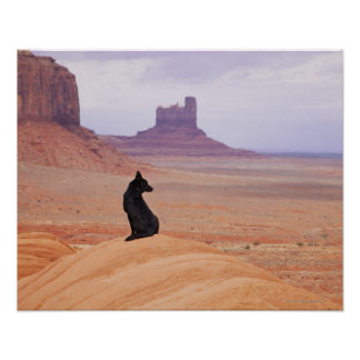 USA, Utah, Monument Valley, Dog sitting on rock Print