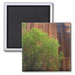 USA, Utah, Paria Canyon- Vermillion Cliffs 2 Inch Square Magnet