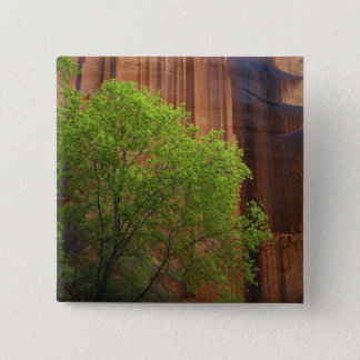 USA, Utah, Paria Canyon- Vermillion Cliffs Button