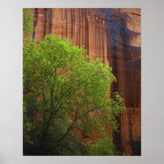 USA, Utah, Paria Canyon- Vermillion Cliffs Poster
