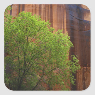 USA, Utah, Paria Canyon- Vermillion Cliffs Square Sticker