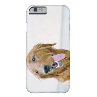 USA, Utah, Salt Lake City, Half shaved Golden Barely There iPhone 6 Case