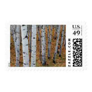 USA, Utah, Uinta-Wasatch-Cache National Forest 2 Postage Stamps