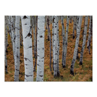 USA, Utah, Uinta-Wasatch-Cache National Forest 2 Poster