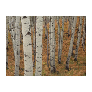 USA, Utah, Uinta-Wasatch-Cache National Forest 2 Wood Print