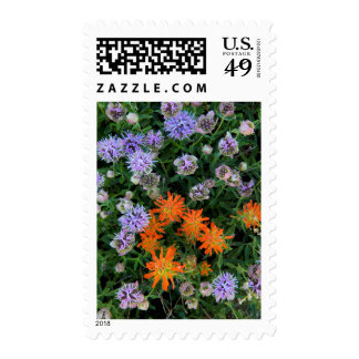 USA, Utah, Uinta-Wasatch-Cache National Forest 3 Postage