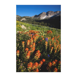 USA, Utah, Uinta-Wasatch-Cache National Forest Canvas Print