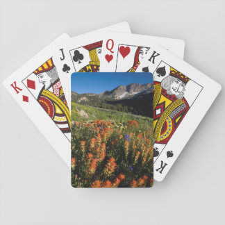 USA, Utah, Uinta-Wasatch-Cache National Forest Playing Cards