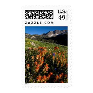 USA, Utah, Uinta-Wasatch-Cache National Forest Postage