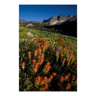 USA, Utah, Uinta-Wasatch-Cache National Forest Poster