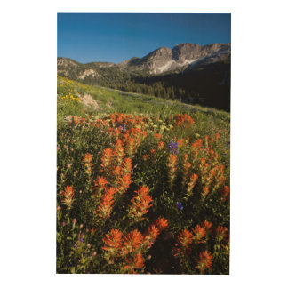 USA, Utah, Uinta-Wasatch-Cache National Forest Wood Print