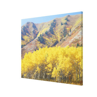 USA, Utah, Wasatch-Cache National Forest, Canvas Print