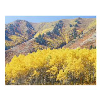 USA, Utah, Wasatch-Cache National Forest, Postcard