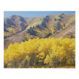 USA, Utah, Wasatch-Cache National Forest, Poster