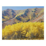 USA, Utah, Wasatch-Cache National Forest, Posters