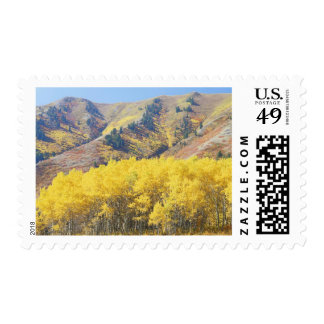 USA, Utah, Wasatch-Cache National Forest, Stamp
