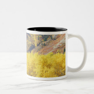 USA, Utah, Wasatch-Cache National Forest, Two-Tone Coffee Mug