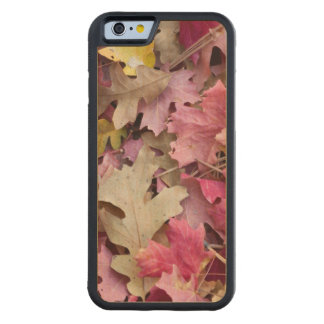 USA, Utah, Zion National Park Carved Maple iPhone 6 Bumper Case